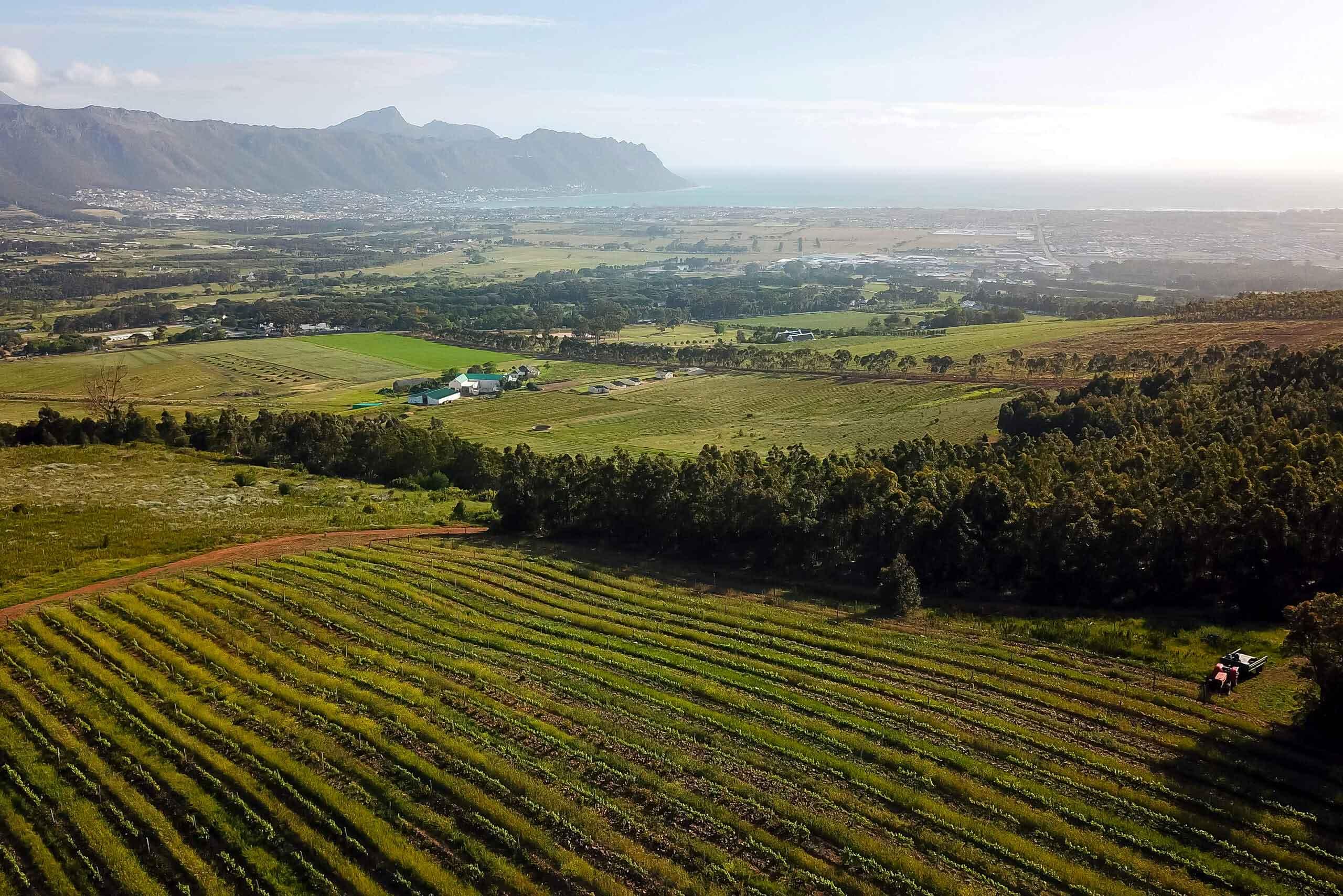 wine-estate-2